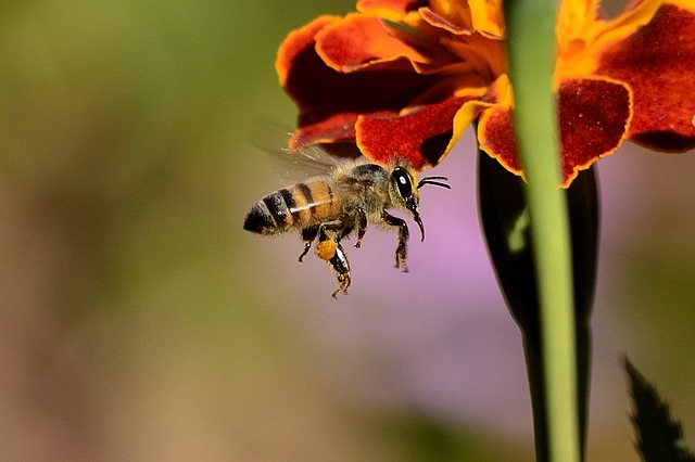 5 Home Remedies for Bee Stings