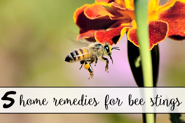 5 Home Remedies for Bee Stings - sixtimemommy.com