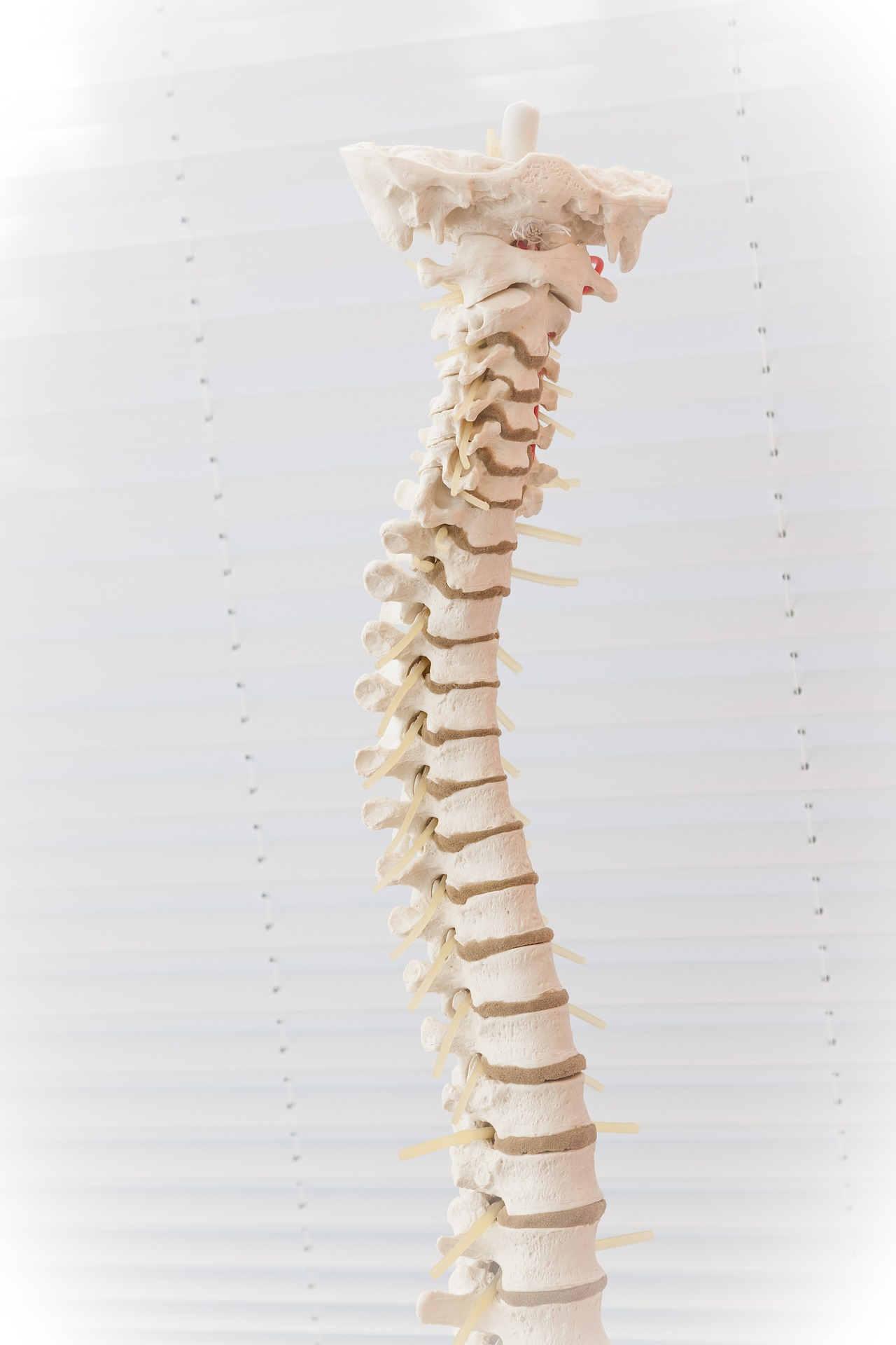 Back-to-School: Let Shriners Hospitals Free Scoliosis SpineScreen App Be Part of Your Routine