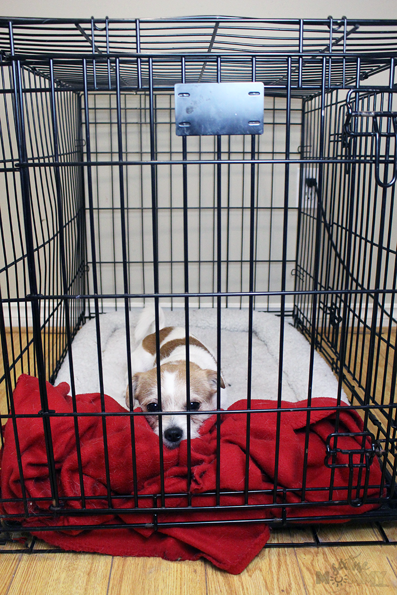 How to Help Your Dog Love Their Crate