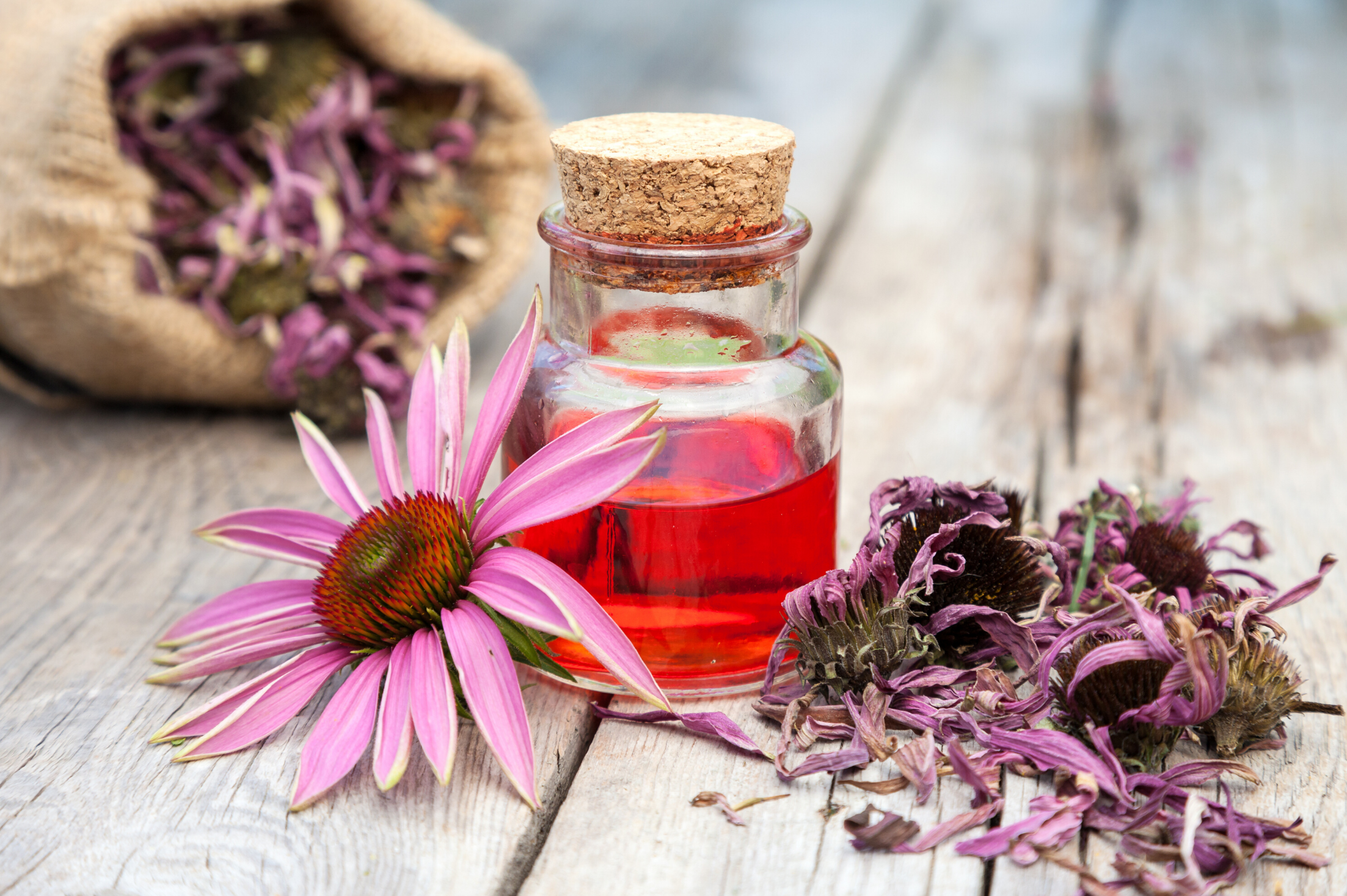 Antiviral Herbs for Your Health