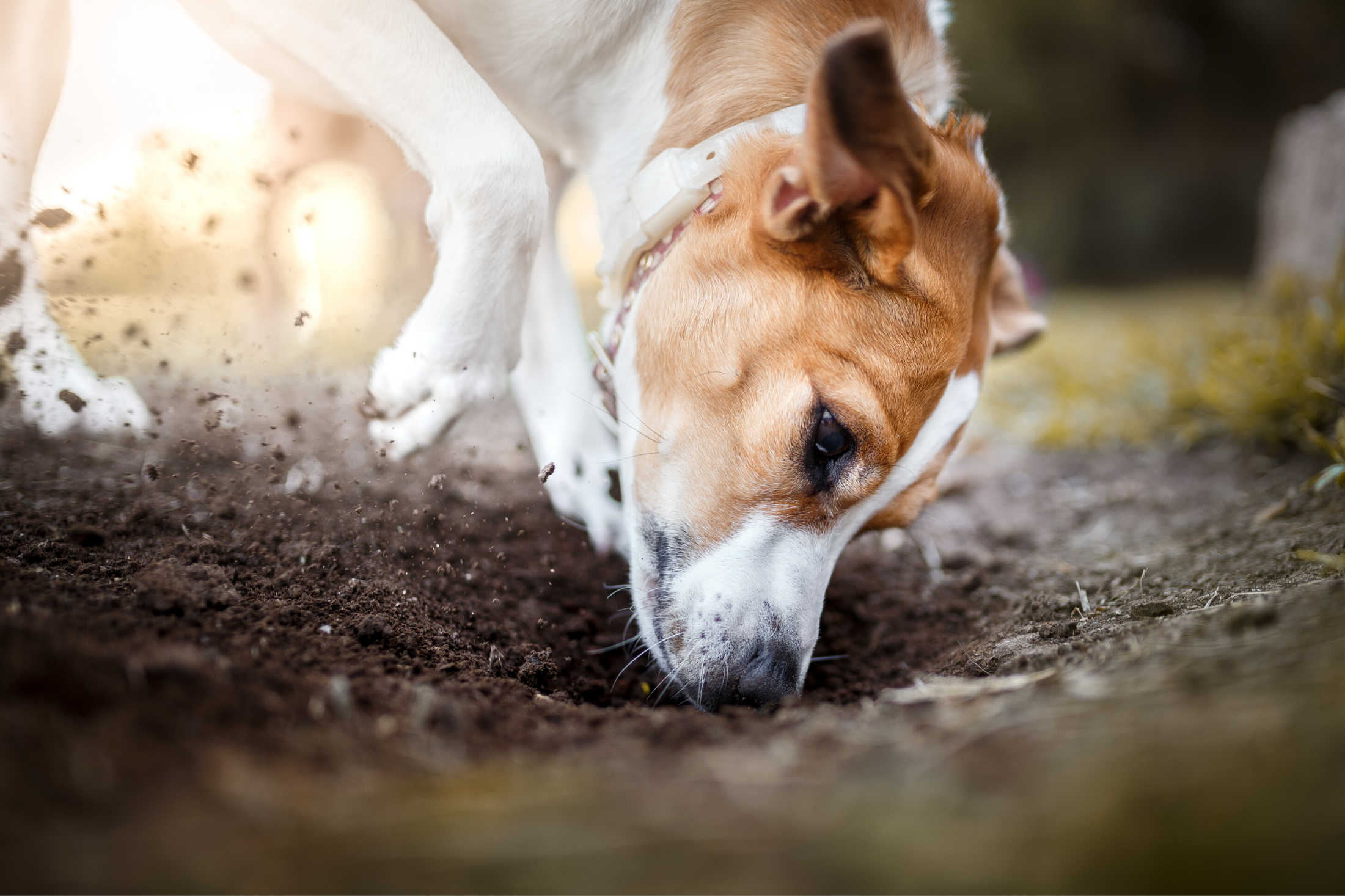 How to Get A Dog to Stop Digging
