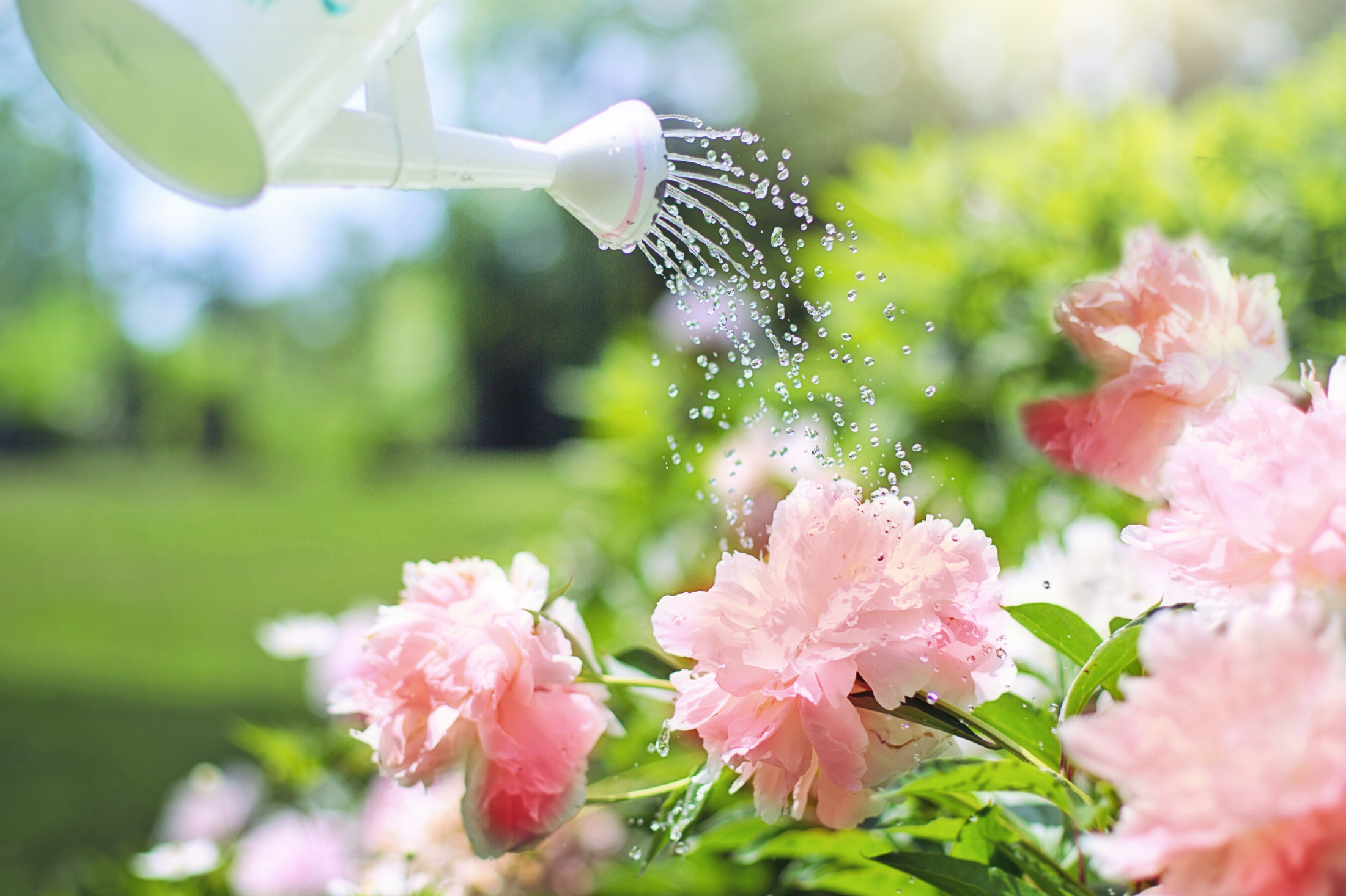 The Best Animal Manures to Use in a Garden