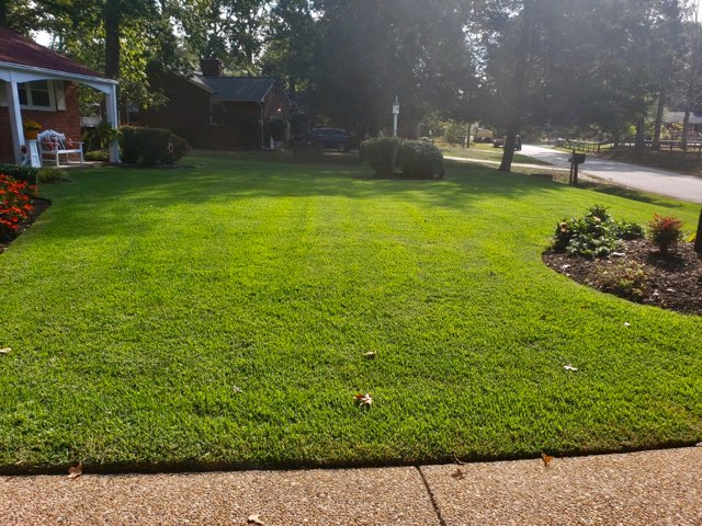 Management - Lawn Care Service - Before and After Pictures