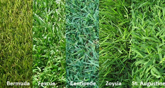 What type of grass do you have by Prestigious Turf Management