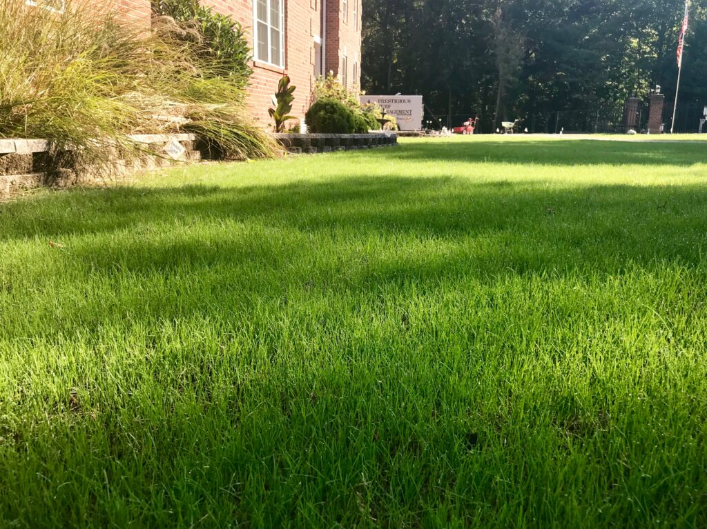 Another beautiful lawn by Prestigious Turf Management of Yorktown VA