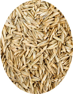 Grass seed by Prestigious Turf Management or Yorktown Feed & Seed Store