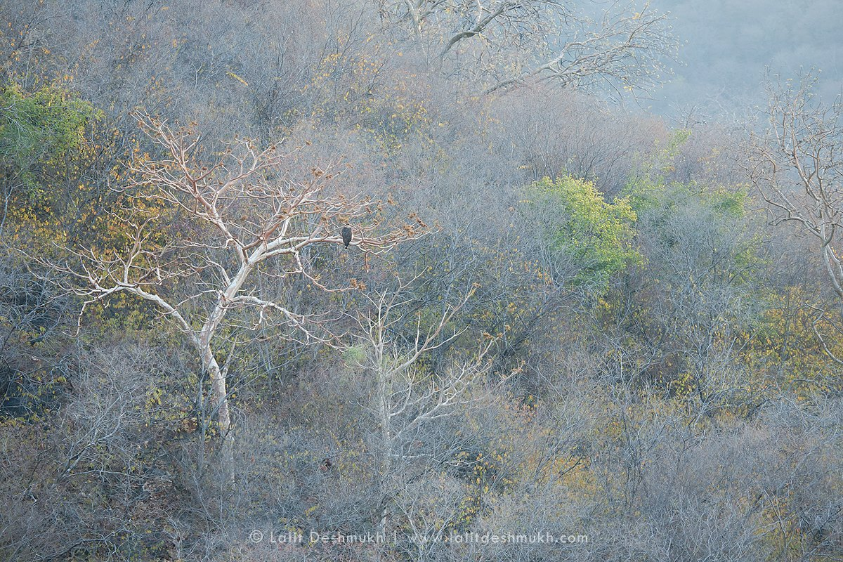 Song of the Forest by Lalit Deshmukh