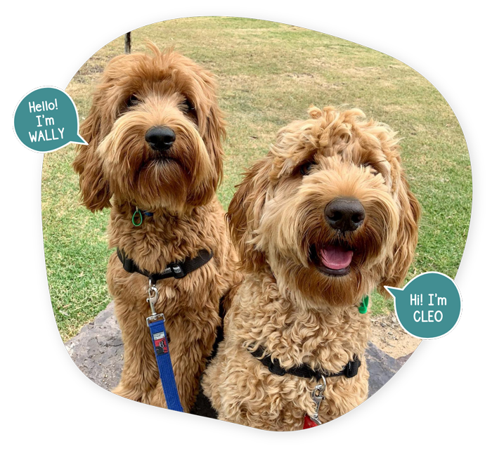 Dog Walking | Paws On The Move (Wally & Cleo)