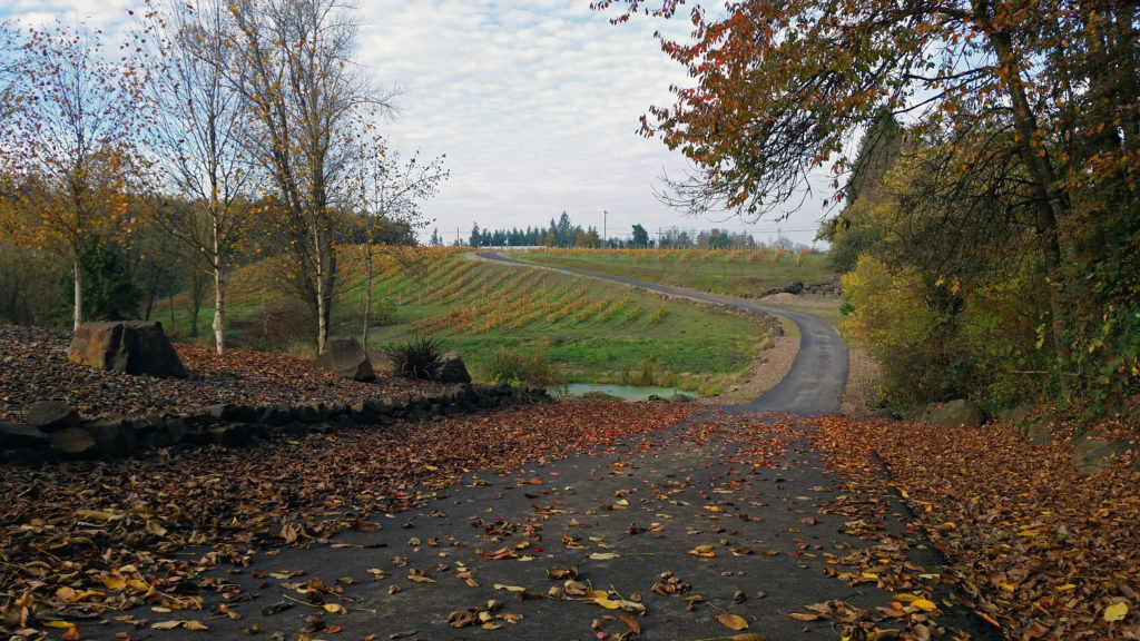 North Vineyards