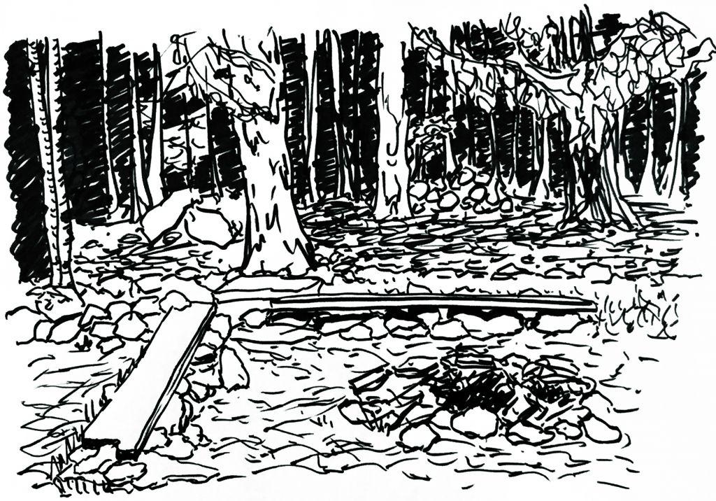 Forest Illustraiton