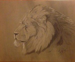 Lion: 16 x 20 Charcoal