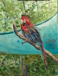 Macaw: 11 x 14 Oil