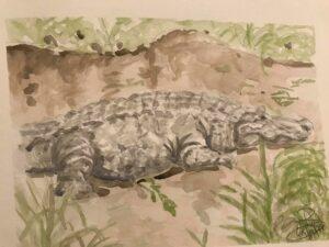 Alligator: 9 x 12 Watercolor