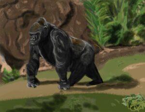 Gorilla : Digital