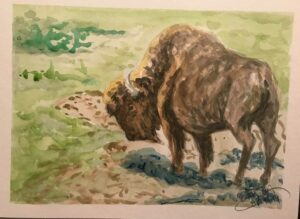 Buffalo: 9 x 12 Watercolor