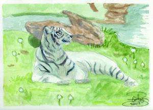 White Tiger: 9 x12 Gouache