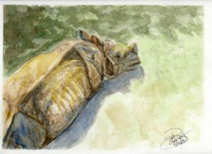 Rhino: 9 x12 Watercolor