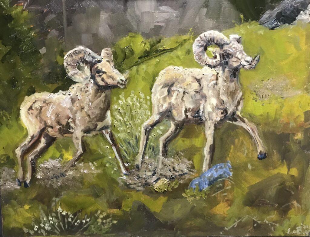 Big Horn Sheep: oil 16 x20