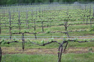 Veritas Winery in Afton, VA