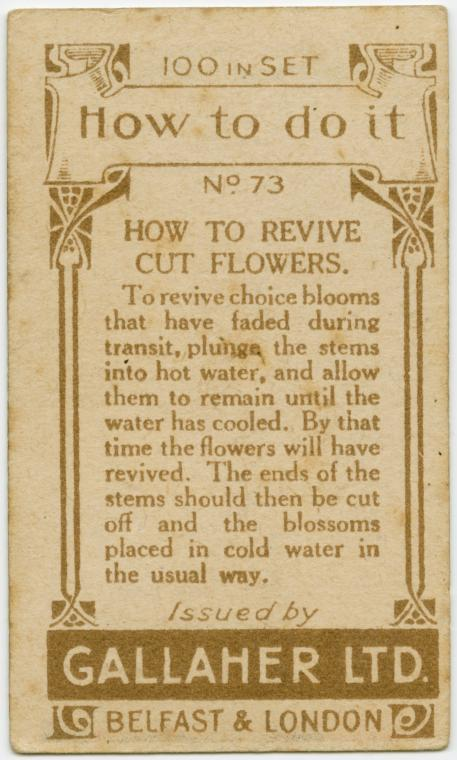 How to revive cut flowers.