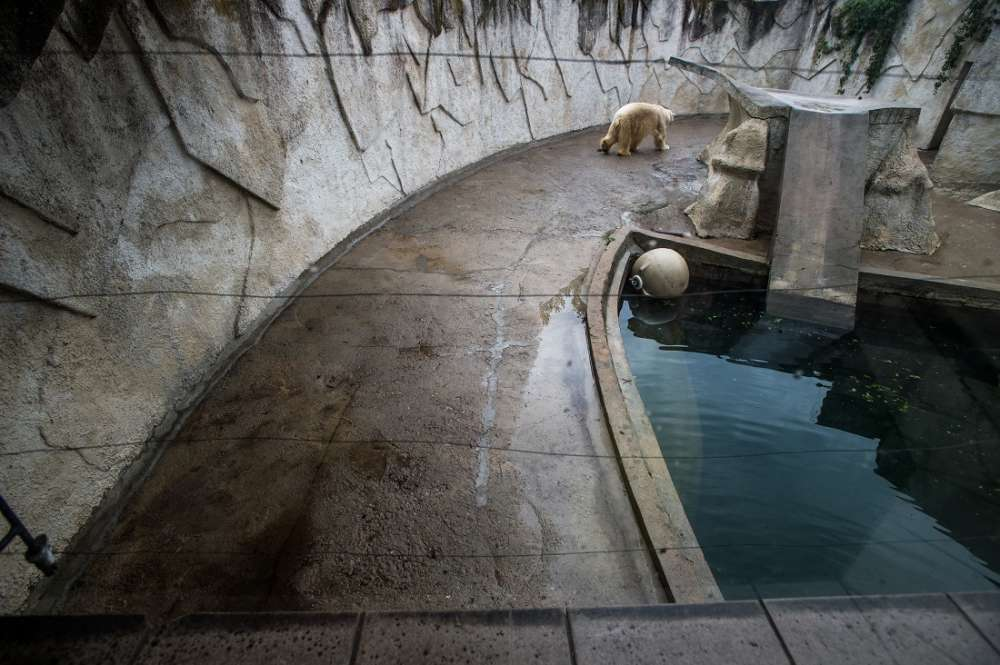 Continents, captive, Canada, Joe McArthur, photo, photography