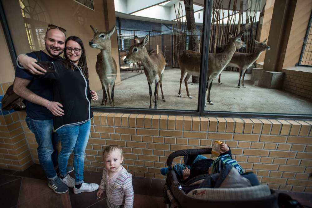 Antelopes, selfie, people, photo