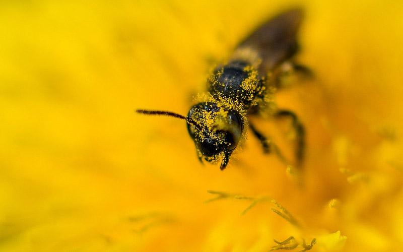Grain of pollen, flower, microscope