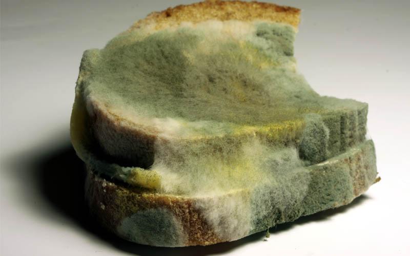 Bread mold, mold in bread, photo