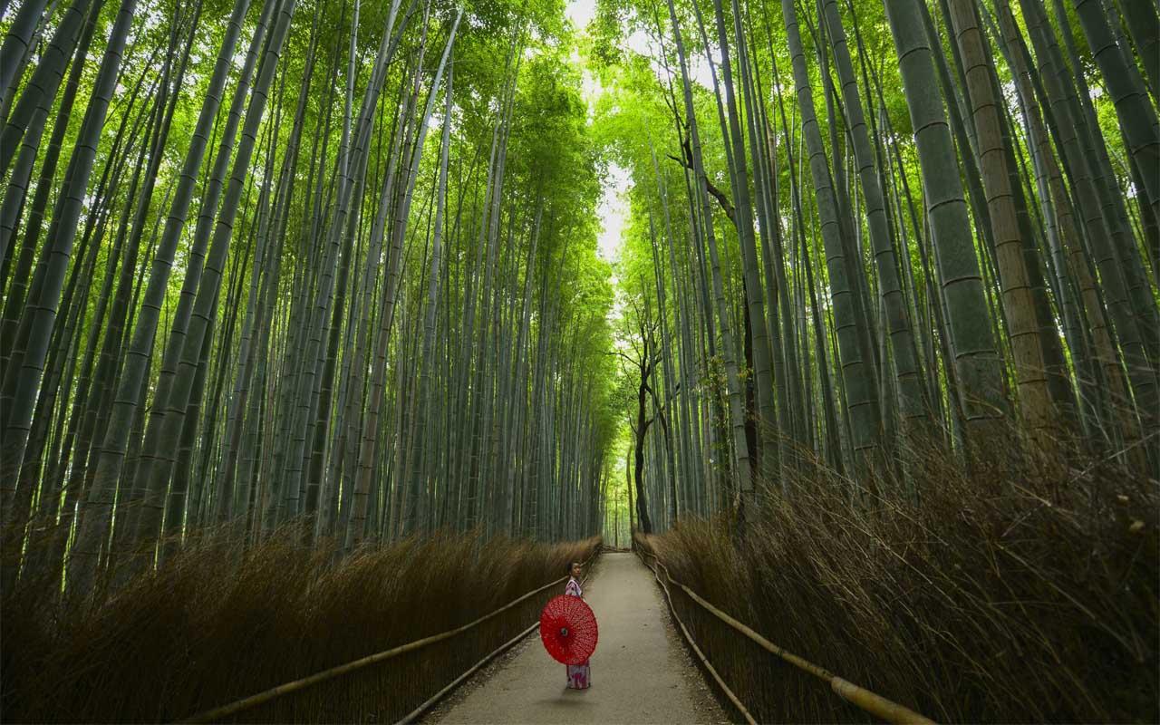 Arashiyama, Japan, Bamboo forest