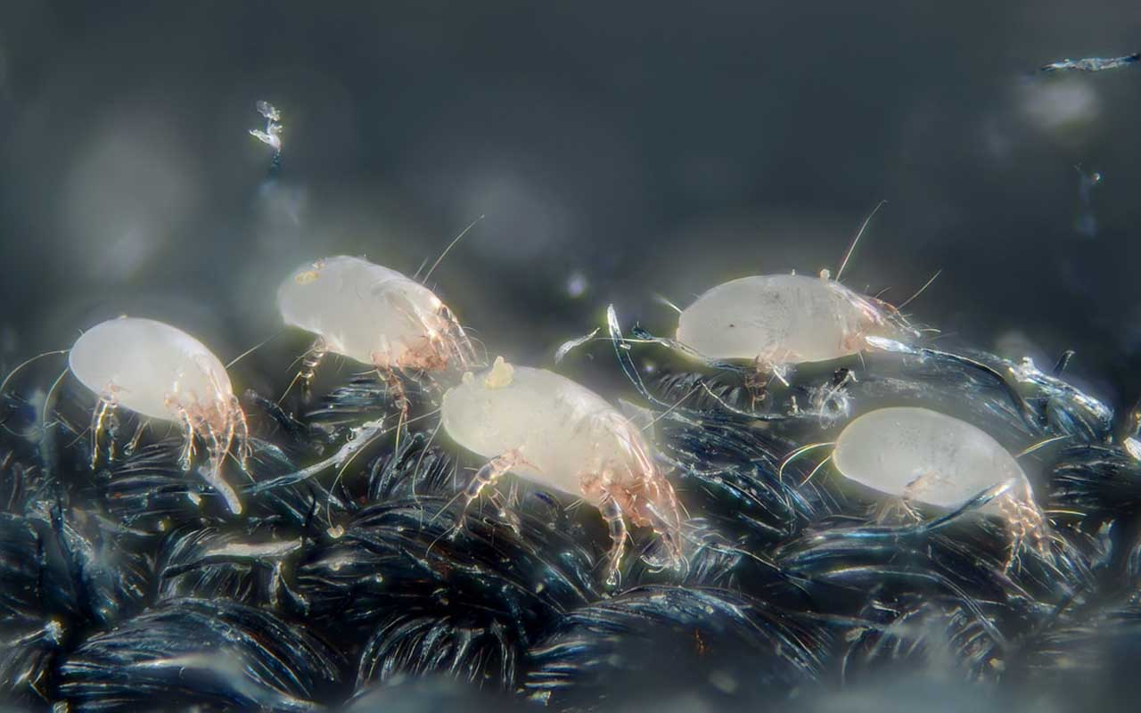 dust mites, bed, sleep, sleeping, weight, house, life