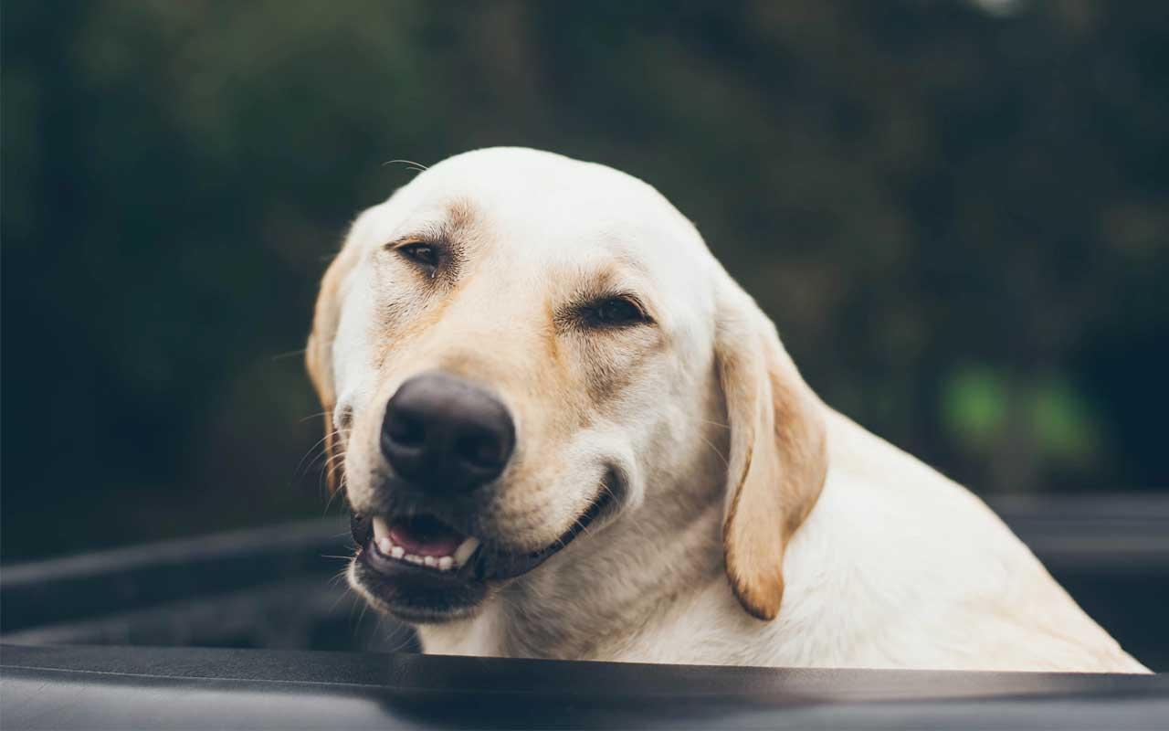 dog, smile, life, animals,