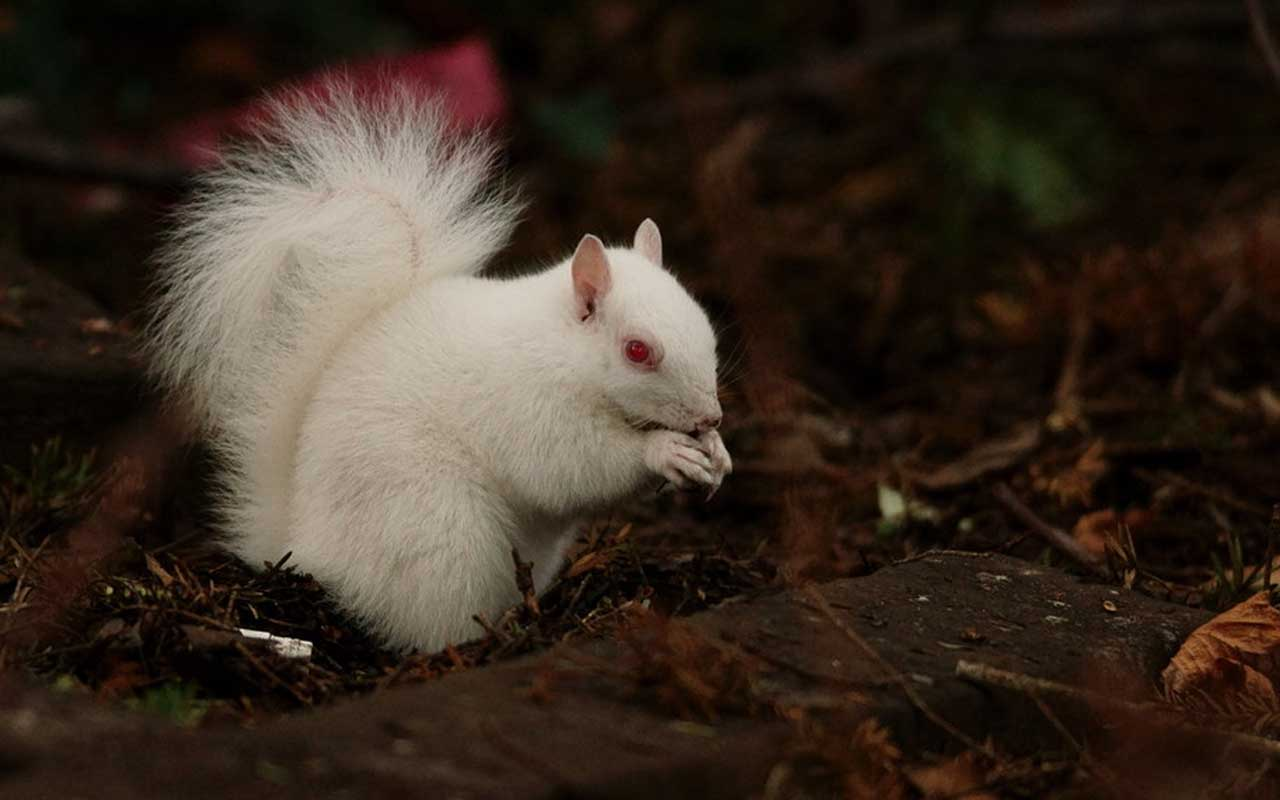 squirrel, albino, nature, wild
