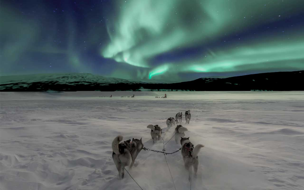 Antarctica, sled, dogs, life