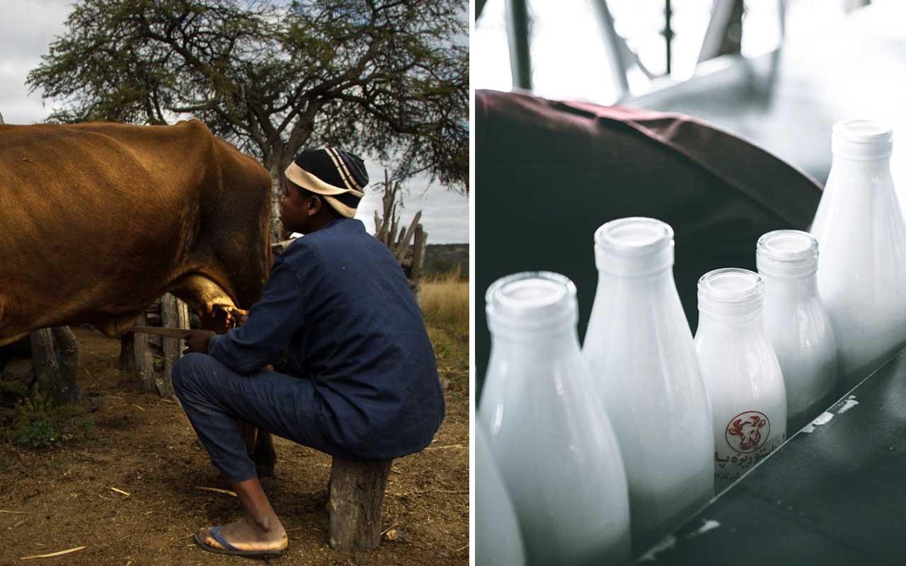 foods, milk, unpasteurized, cow