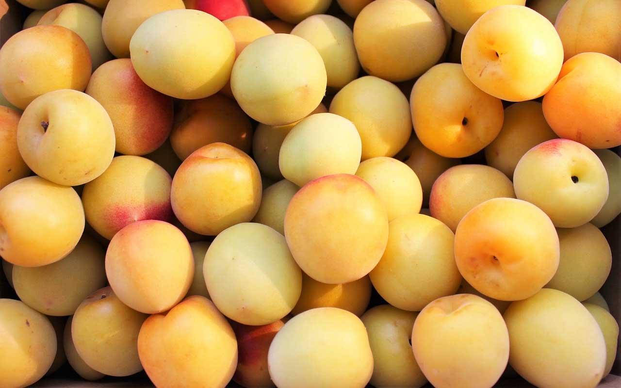 Mirabelle plums, fruit, US, law