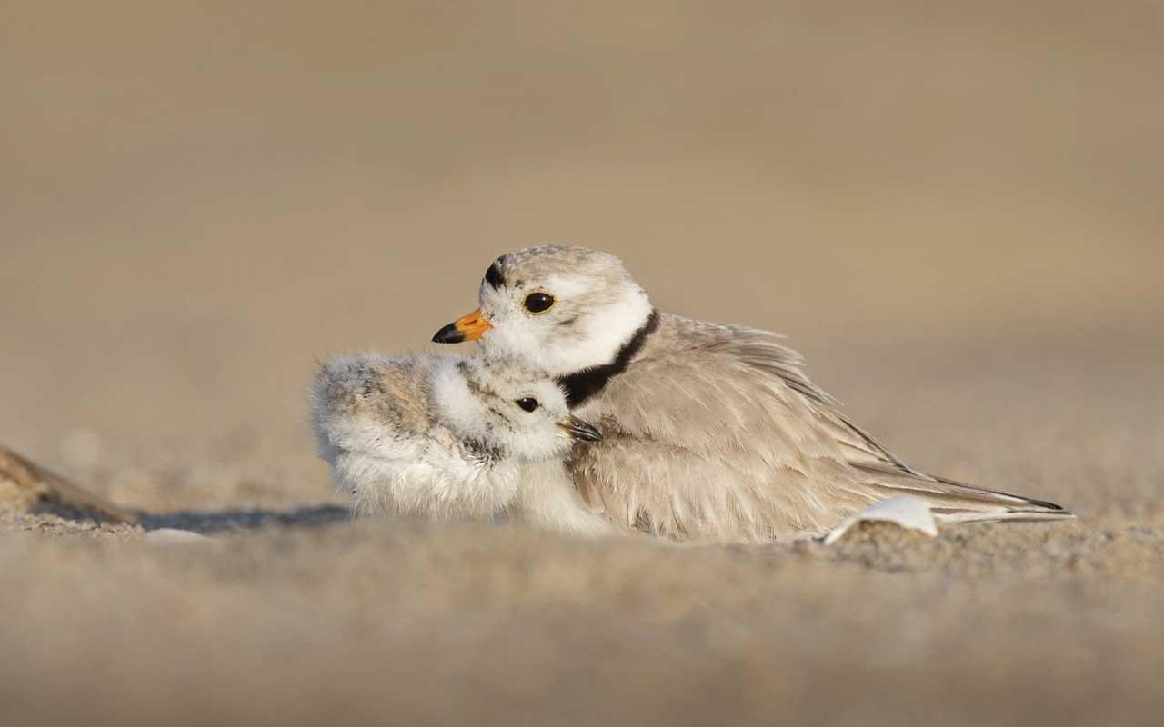 Bird, mother, nature, myths