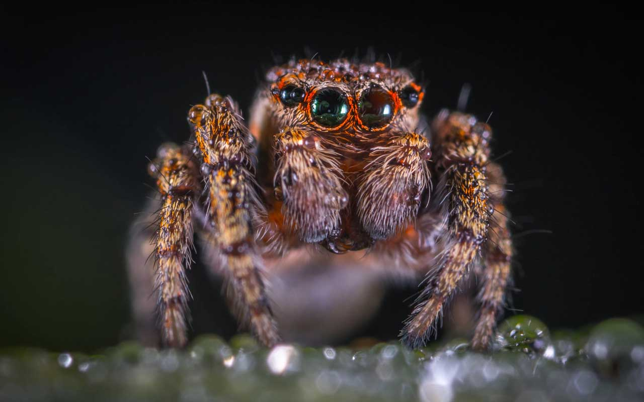 Spiders, humans, facts, life