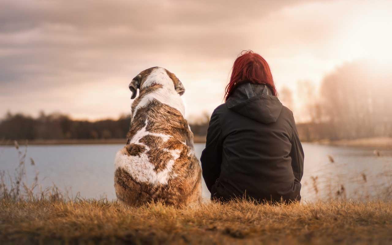 seizures, dog, sense, smell