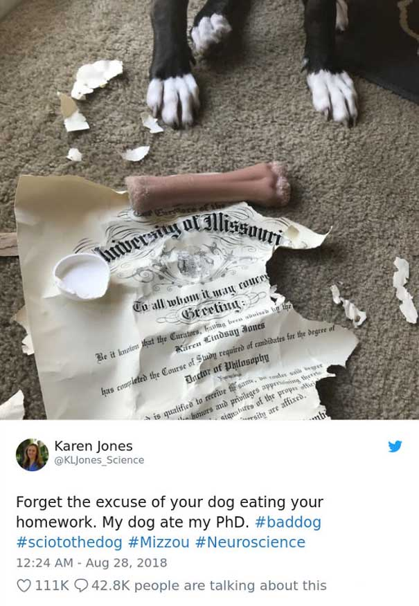PhD, homework, dog, Missouri