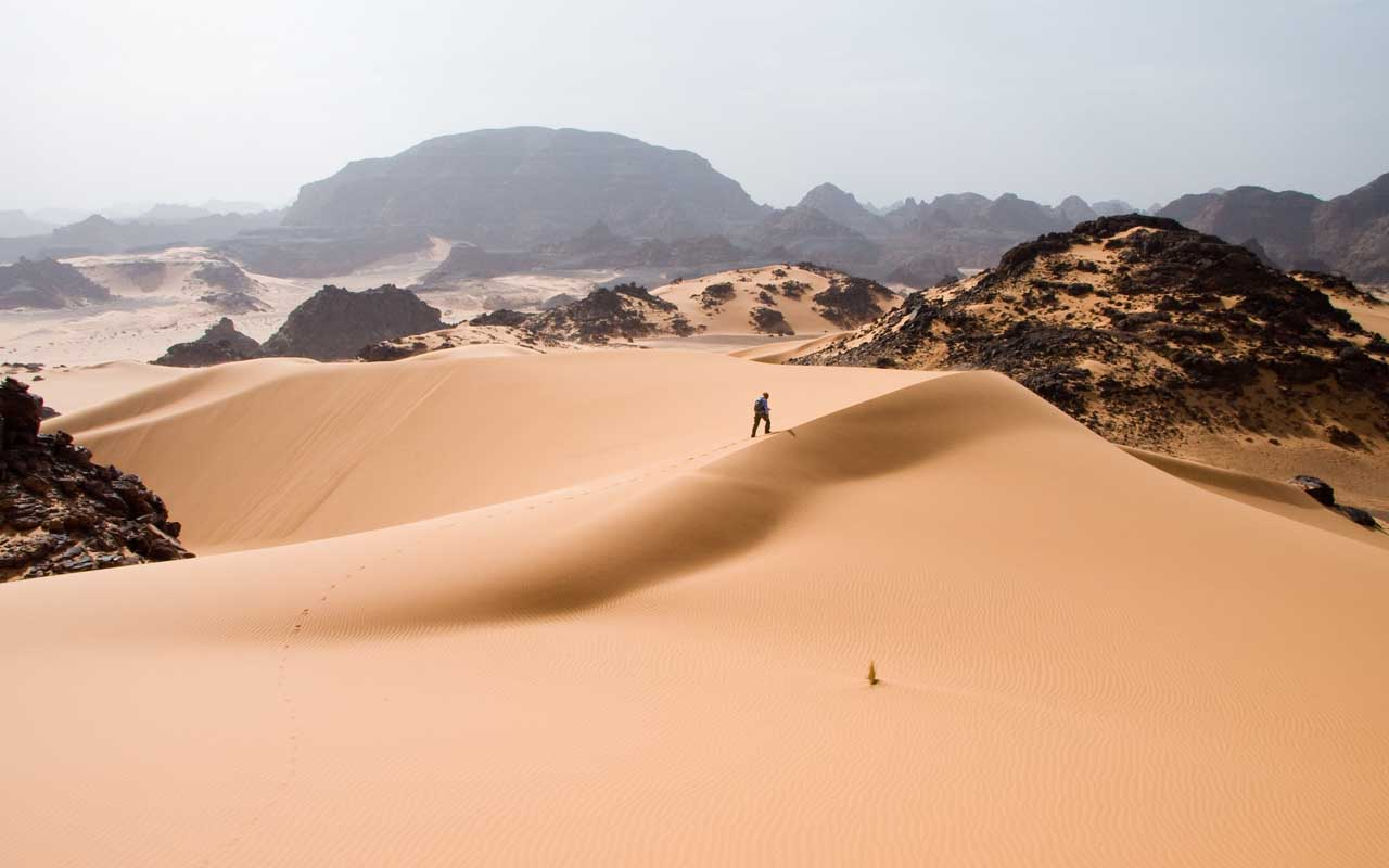 Sahara, desert, nature, plant, life