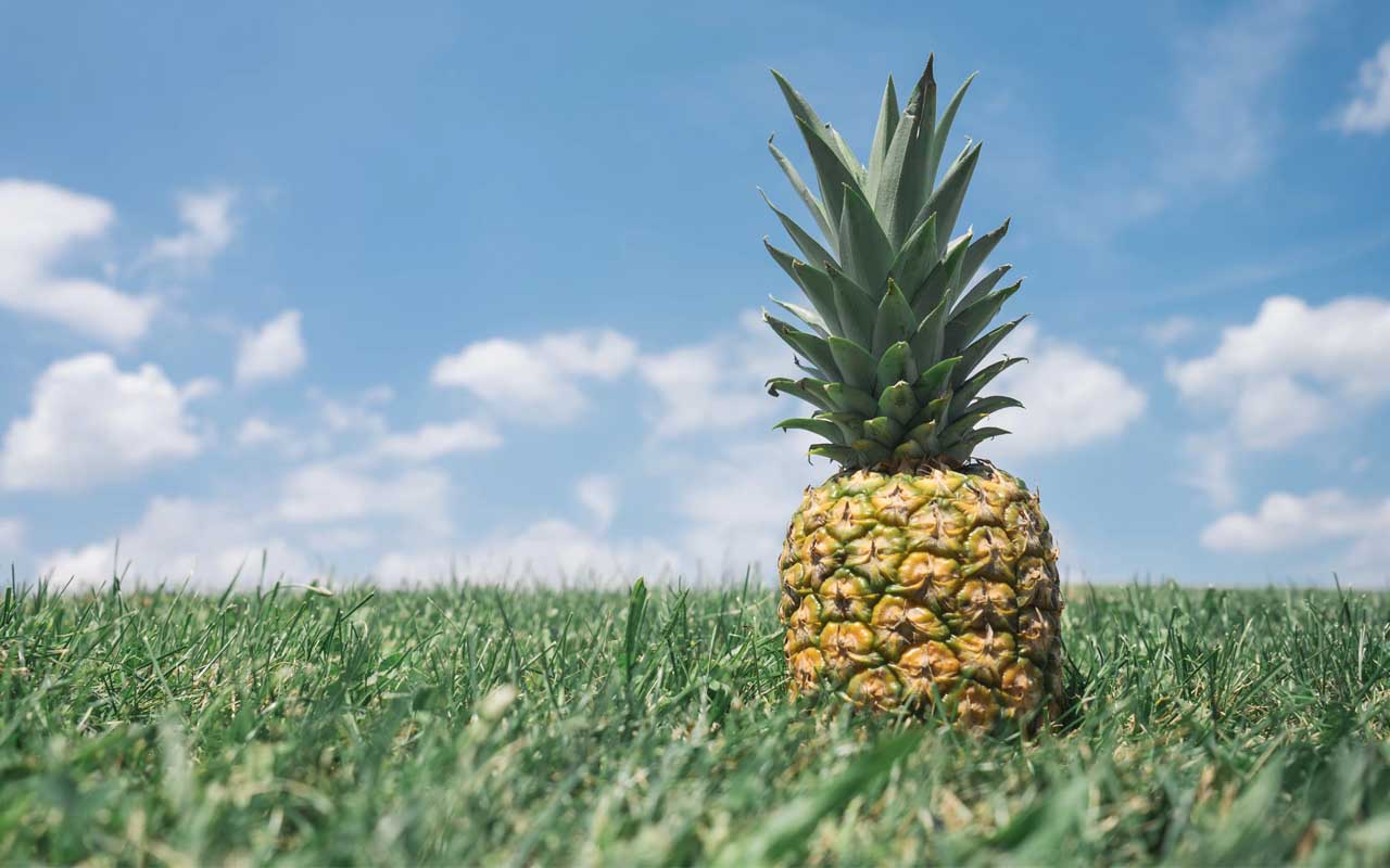 pineapple, nature, facts, food, fun