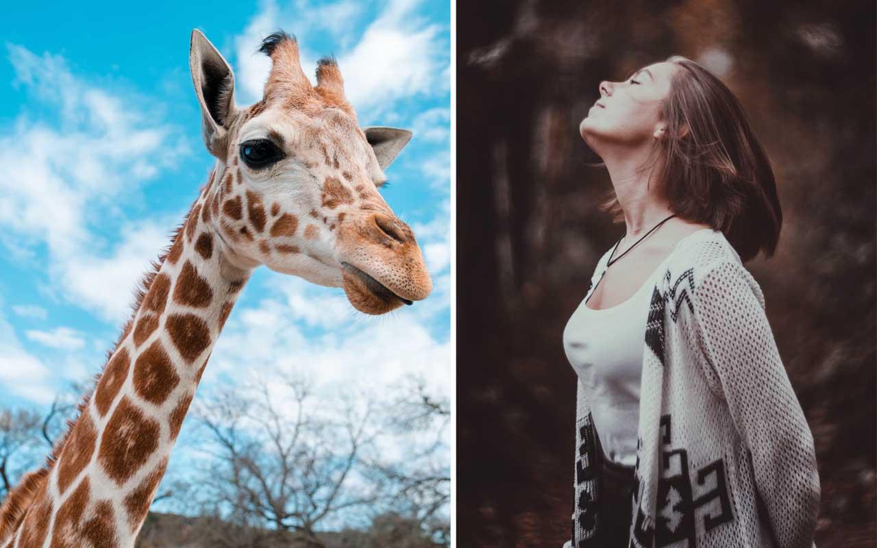 neck, giraffe, animal, woman, facts
