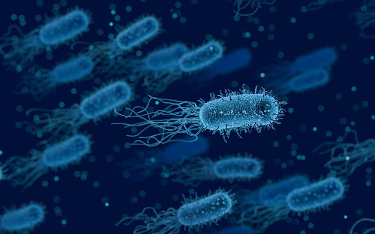 bacteria, cells, human body, science