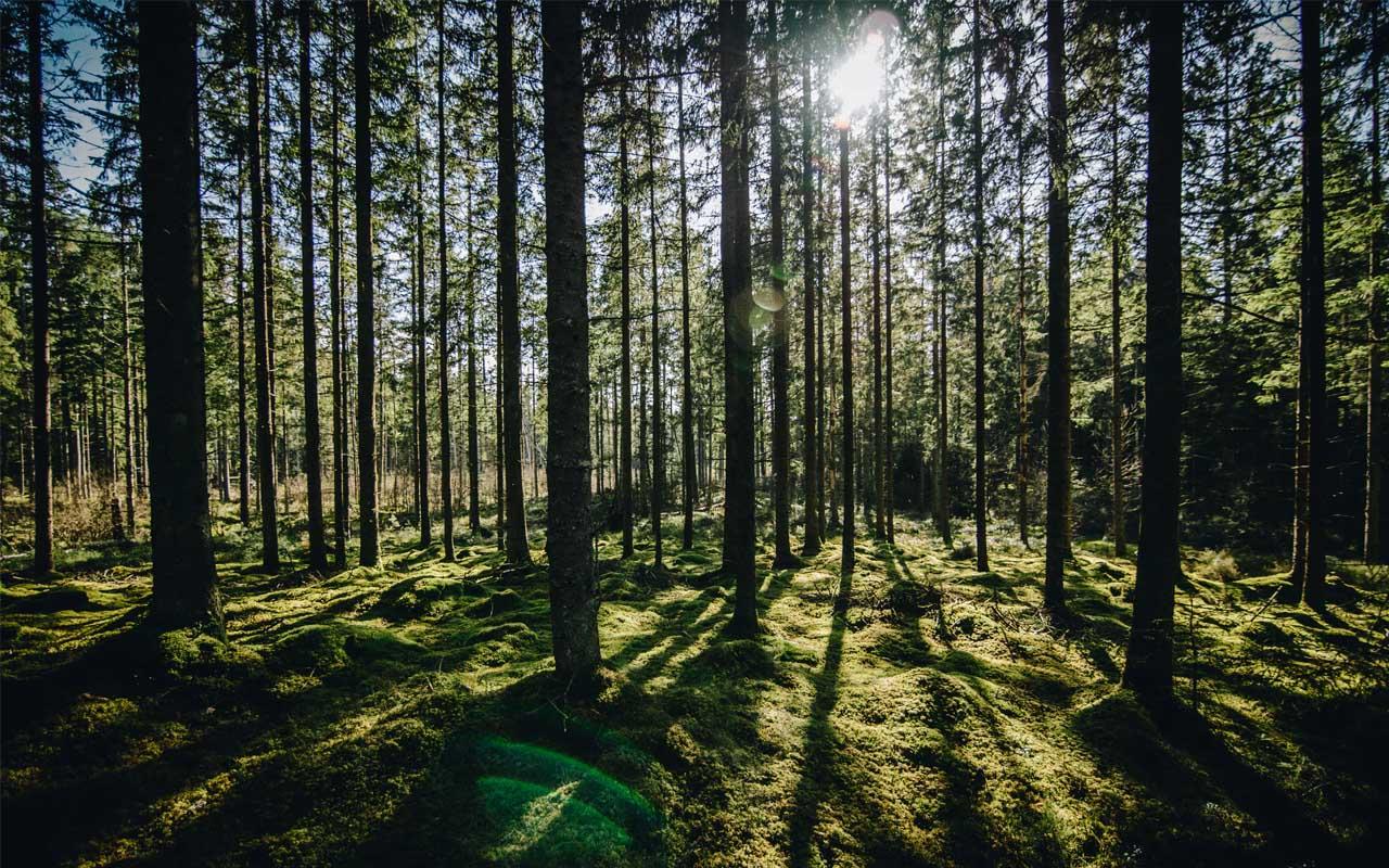 Sweden, paper, export, forest, life