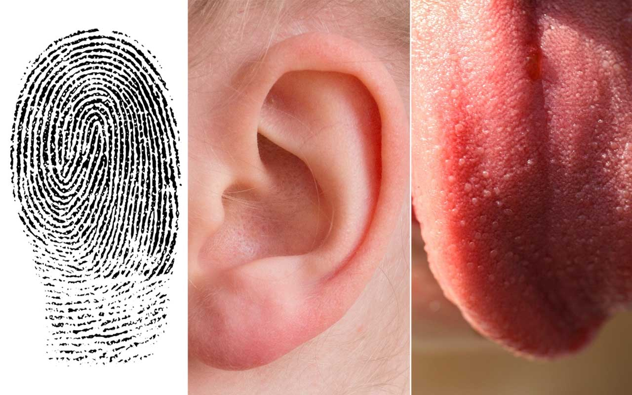 ear, tongue, fingerprints, facts, bodies, life, people, health