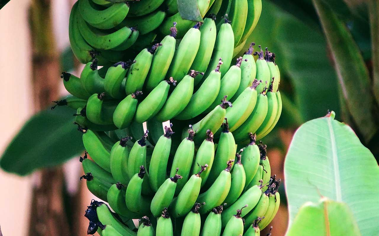 bananas, cool facts, life, people, nature, gravity, Earth
