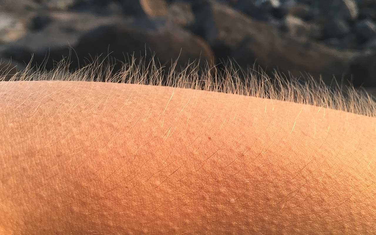 goosebumps, life, evolution, facts, people, history, science
