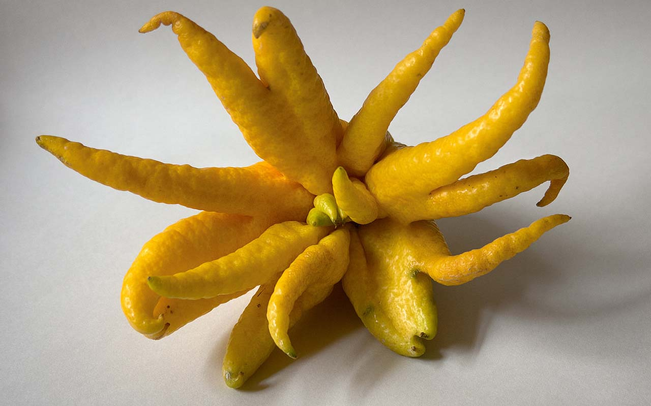 Buddhas hand, fruits, life, food, facts
