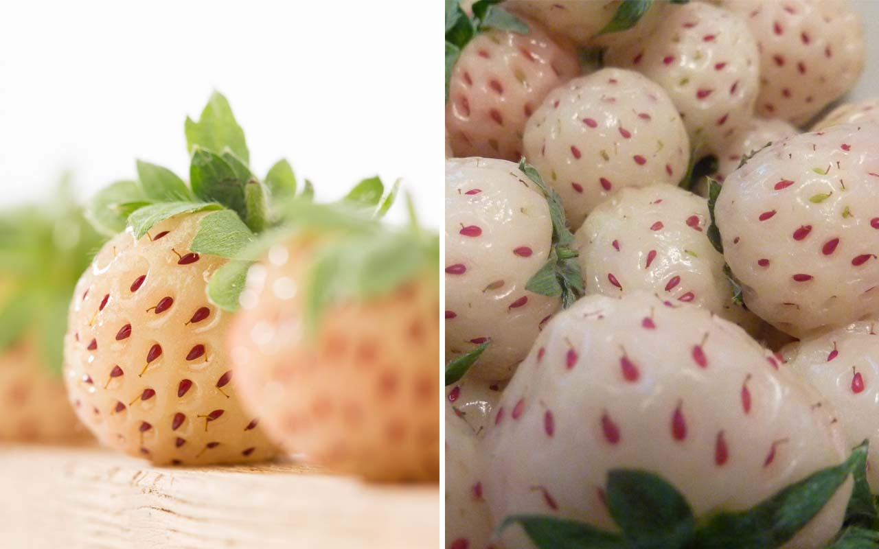 Pineberry, strawberry, food, fruits, facts, nature